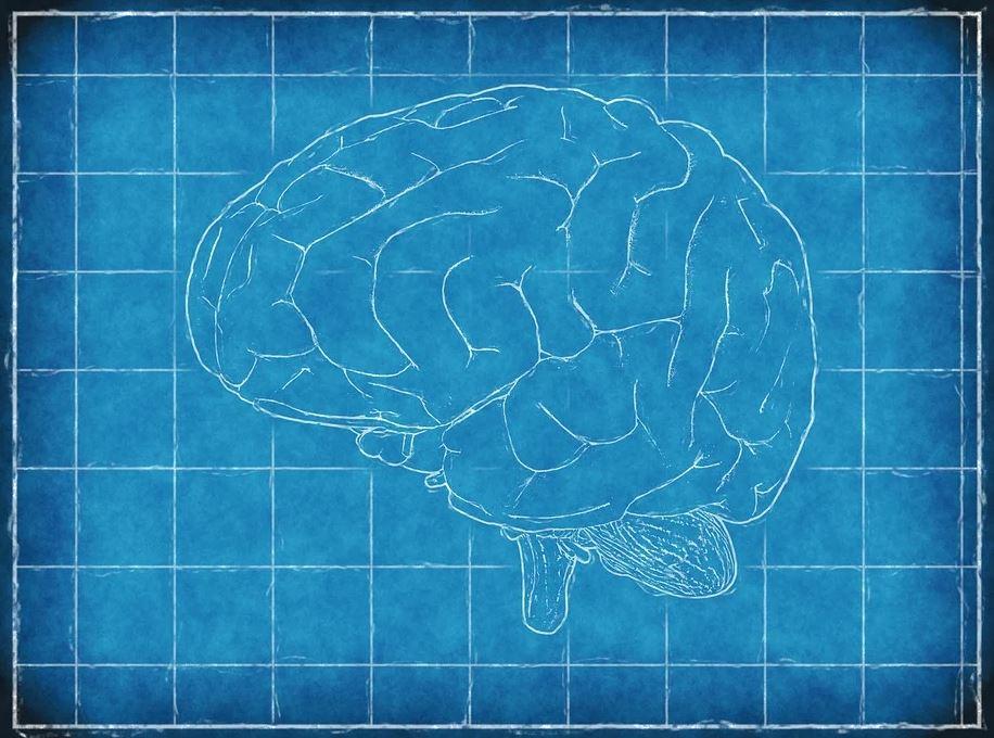 A blueprint of a brain
